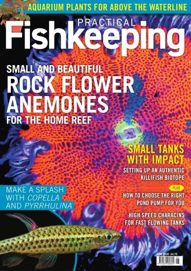 Practical Fishkeeping - June (2020)