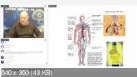 Работа с сердцем и сердечно-сосудистой системой (2019) Вебинар