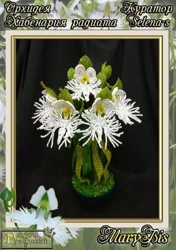Галерея выпускников Орхидея Хабенария радиата _c49ade419dc730c740ac7909dee0bb04