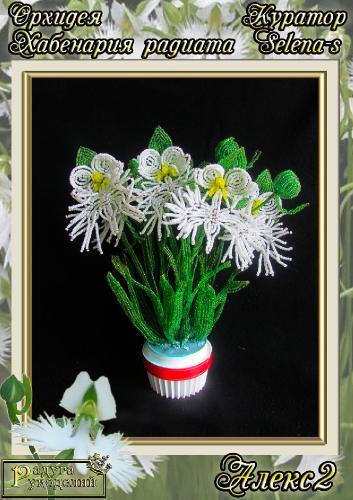 Галерея выпускников Орхидея Хабенария радиата _3fc5fccc2b04e027b020b6a634369e3c