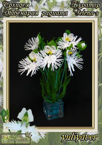 Галерея выпускников Орхидея Хабенария радиата _4b10c65ce2e0cef5e0349df4af168e56