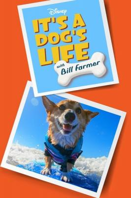 Its a Dogs Life With Bill Farmer S01E09 720p WEB H264-ASCENDANCE