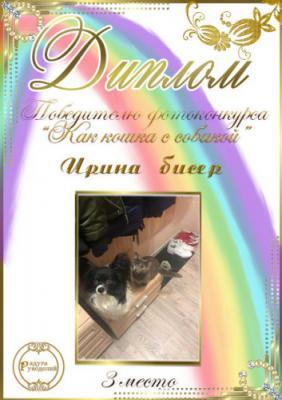"""Фотоконкурс """"Как кошка с собакой.""""Поздравляем победителей. Bd2f68ed53ed5bacffdcc14fcf40f020"""