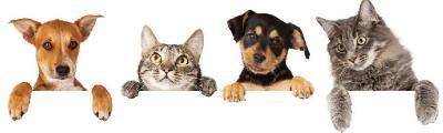 """Фотоконкурс """"Как кошка с собакой.""""Поздравляем победителей. 293807d733c95dbf7edae60b8f2eabb0"""