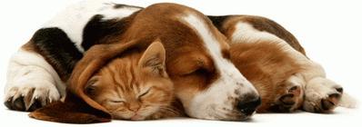 """Фотоконкурс """"Как кошка с собакой.""""Поздравляем победителей. 577e946a1e1d1a3c5cc489a16556b1ca"""
